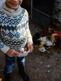 Rebellion in the farm