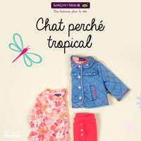 Chat perché tropical